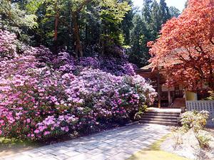 pic_spring_01.jpg